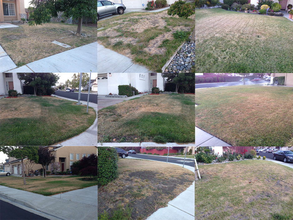 fake-grass California drought worsening: New water restrictions carry penalty of up to $500