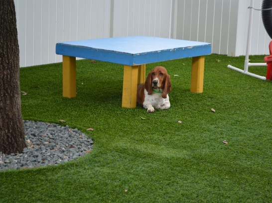 Artificial Grass Photos: Fake Lawn San Felipe, Texas Grass For Dogs, Dogs Runs
