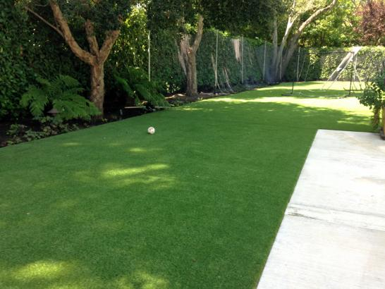 Artificial Grass Photos: Fake Pet Turf Converse Texas Installation