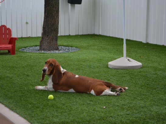 Artificial Grass Photos: Grass Installation Prairie View, Texas Hotel For Dogs, Grass for Dogs